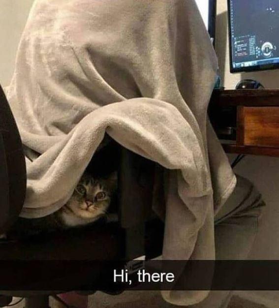 Cat - Hi, there