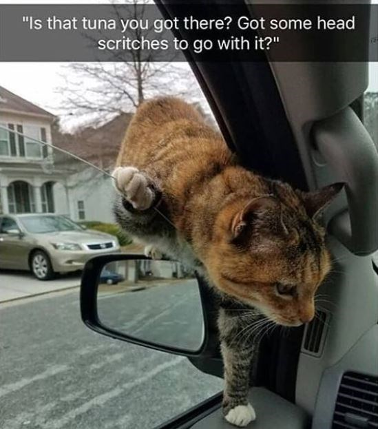 """Car - """"Is that tuna you got there? Got some head scritches to go with it?"""""""