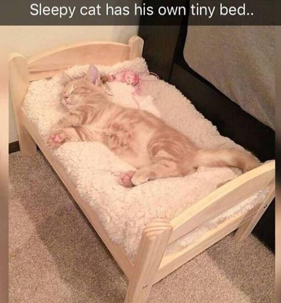 Cat - Sleepy cat has his own tiny bed...
