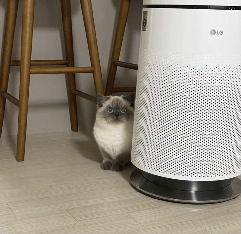 Cat - LG