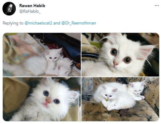 Nose - Rawan Habib ... @RaHabib_ Replying to @michaelscat2 and @Dr_Reemothman