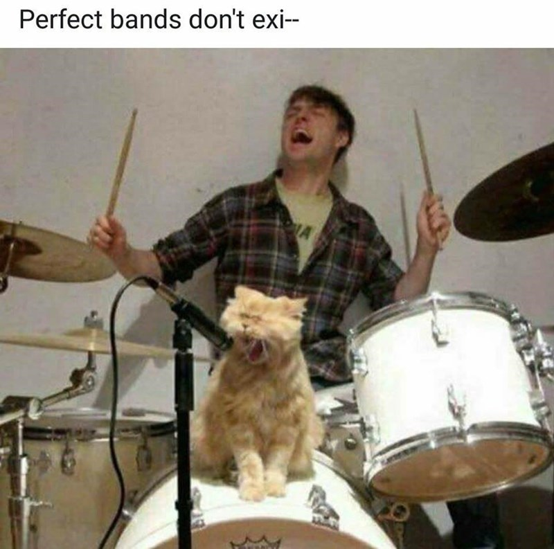 Cat meme - Musical instrument - Perfect bands don't exi--
