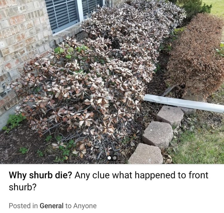 Plant - Why shurb die? Any clue what happened to front shurb? Posted in General to Anyone