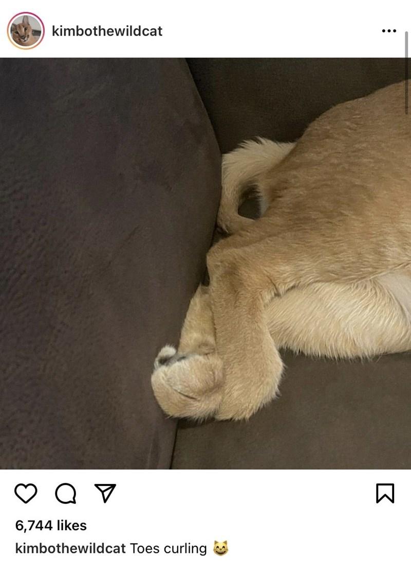Organism - kimbothewildcat ... 6,744 likes kimbothewildcat Toes curling