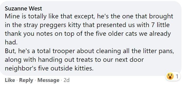 Font - Suzanne West Mine is totally like that except, he's the one that brought in the stray preggers kitty that presented us with 7 little thank you notes on top of the five older cats we already had. But, he's a total trooper about cleaning all the litter pans, along with handing out treats to our next door neighbor's five outside kitties. 1 Like Reply Message 2d