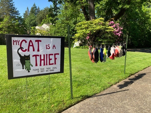 """Plant - MY """"CAT THIEF IS A ESHE PLEASE TAKE THESE ITEMS IF THEY ARE YOURS"""