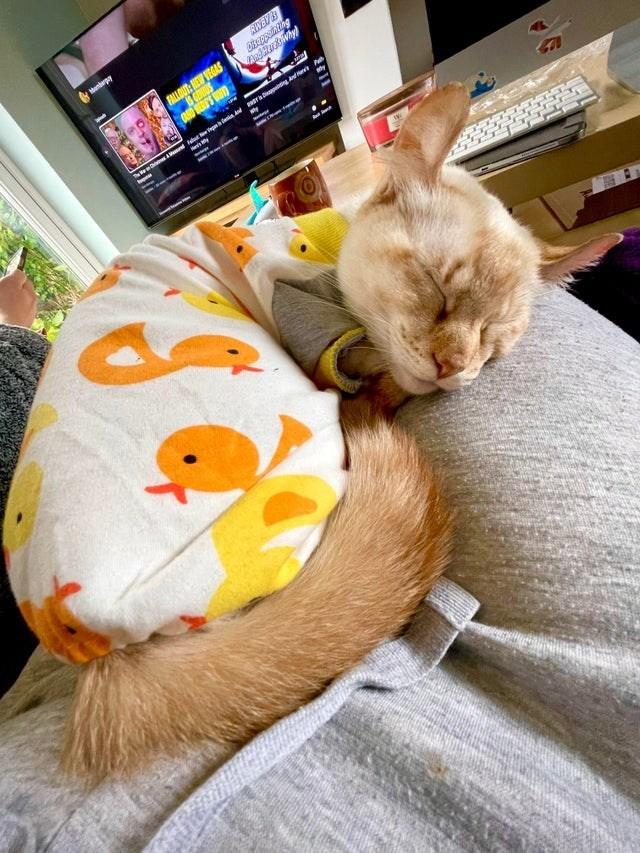 Cat - endepy FALLOUT: NEW VEGAS n r g P