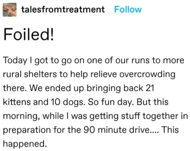 Font - talesfromtreatment Follow Foiled! Today I got to go on one of our runs to more rural shelters to help relieve overcrowding there. We ended up bringing back 21 kittens and 10 dogs. So fun day. But this morning, while I was getting stuff together in preparation for the 90 minute drive.. This happened.
