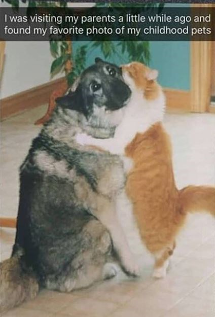 Dog - I was visiting my parents a little while ago and found my favorite photo of my childhood pets