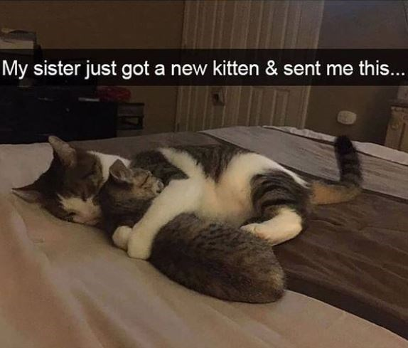 Cat - My sister just got a new kitten & sent me this...