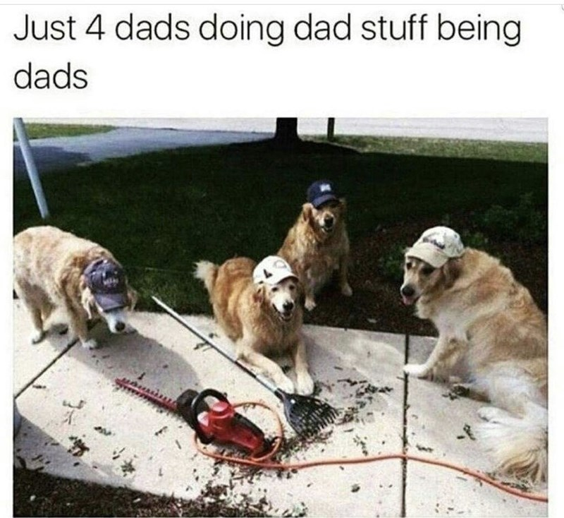 Dog - Just 4 dads doing dad stuff being dads