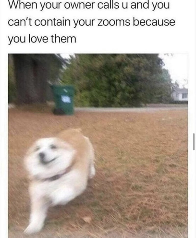 Dog - When your owner calls u and you can't contain your zooms because you love them