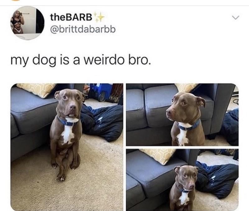 Dog - theBARB @brittdabarbb my dog is a weirdo bro. <>