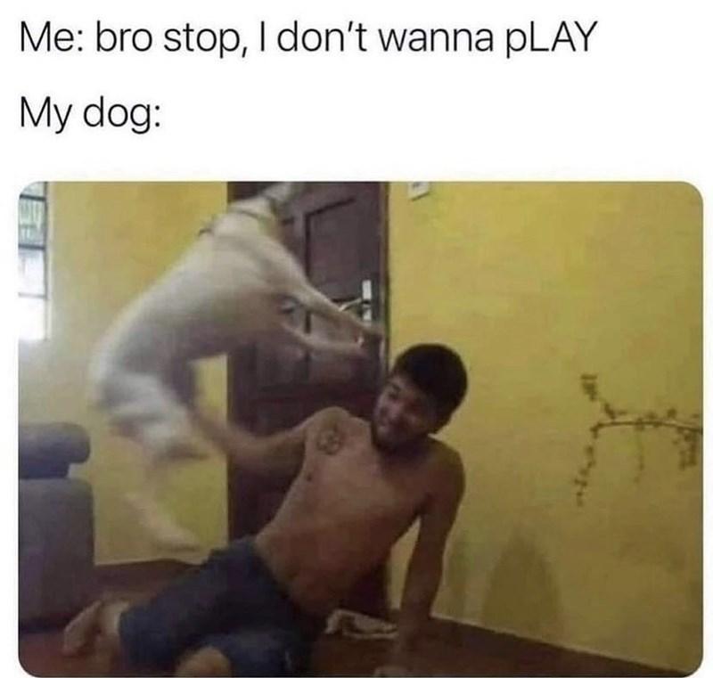 Photograph - Me: bro stop, I don't wanna pLAY My dog: