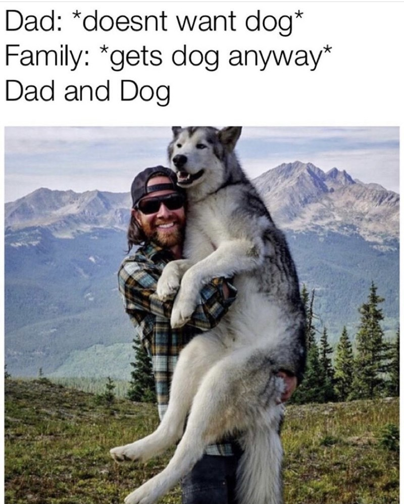 Sky - Dad: *doesnt want dog* Family: *gets dog anyway* Dad and Dog