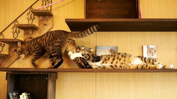 Felidae - て(で.