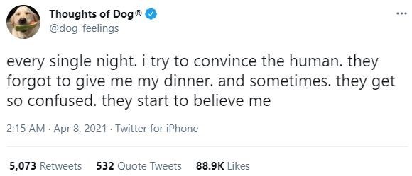 Font - Thoughts of Dog® @dog_feelings ... every single night. i try to convince the human. they forgot to give me my dinner. and sometimes. they get so confused. they start to believe me 2:15 AM Apr 8, 2021 Twitter for iPhone 5,073 Retweets 532 Quote Tweets 88.9K Likes