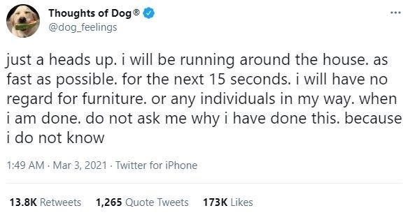 Font - Thoughts of Dog® @dog_feelings just a heads up. i will be running around the house. as fast as possible. for the next 15 seconds. i will have no regard for furniture. or any individuals in my way. when i am done. do not ask me why i have done this. because i do not know 1:49 AM - Mar 3, 2021 - Twitter for iPhone 13.8K Retweets 1,265 Quote Tweets 173K Likes