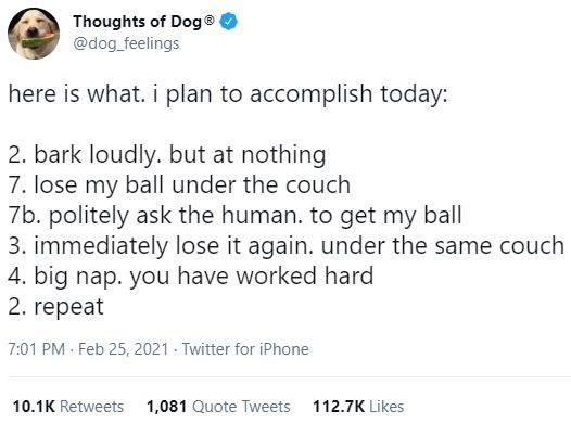 Font - Thoughts of Dog® @dog_feelings here is what. i plan to accomplish today: 2. bark loudly. but at nothing 7. lose my ball under the couch 7b. politely ask the human. to get my ball 3. immediately lose it again. under the same couch 4. big nap. you have worked hard 2. repeat 7:01 PM · Feb 25, 2021 - Twitter for iPhone 10.1K Retweets 1,081 Quote Tweets 112.7K Likes