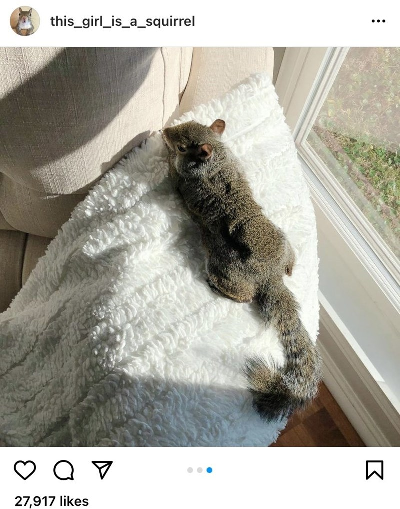 Plant - this_girl_is_a_squirrel ... 27,917 likes