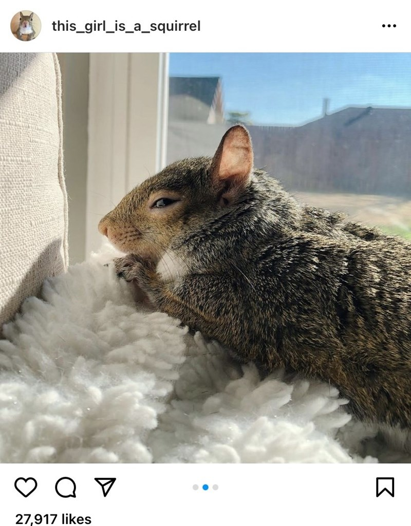Vertebrate - this_girl_is_a_squirrel ... 27,917 likes
