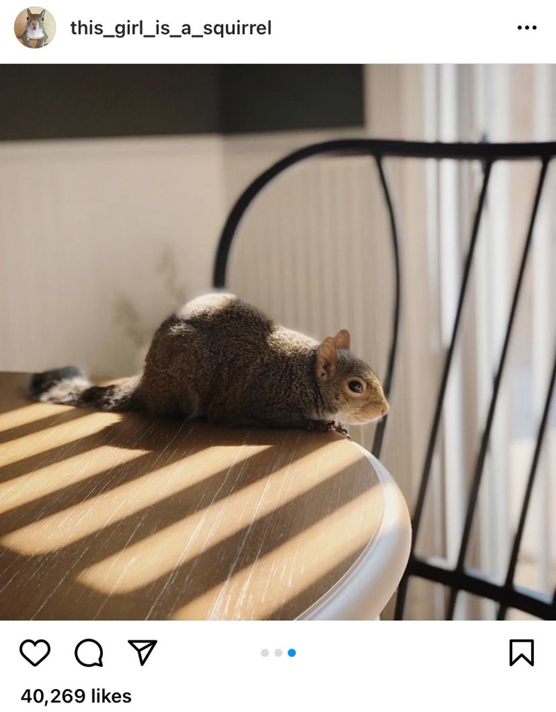 Photograph - this_girl_is_a_squirrel ... 40,269 likes