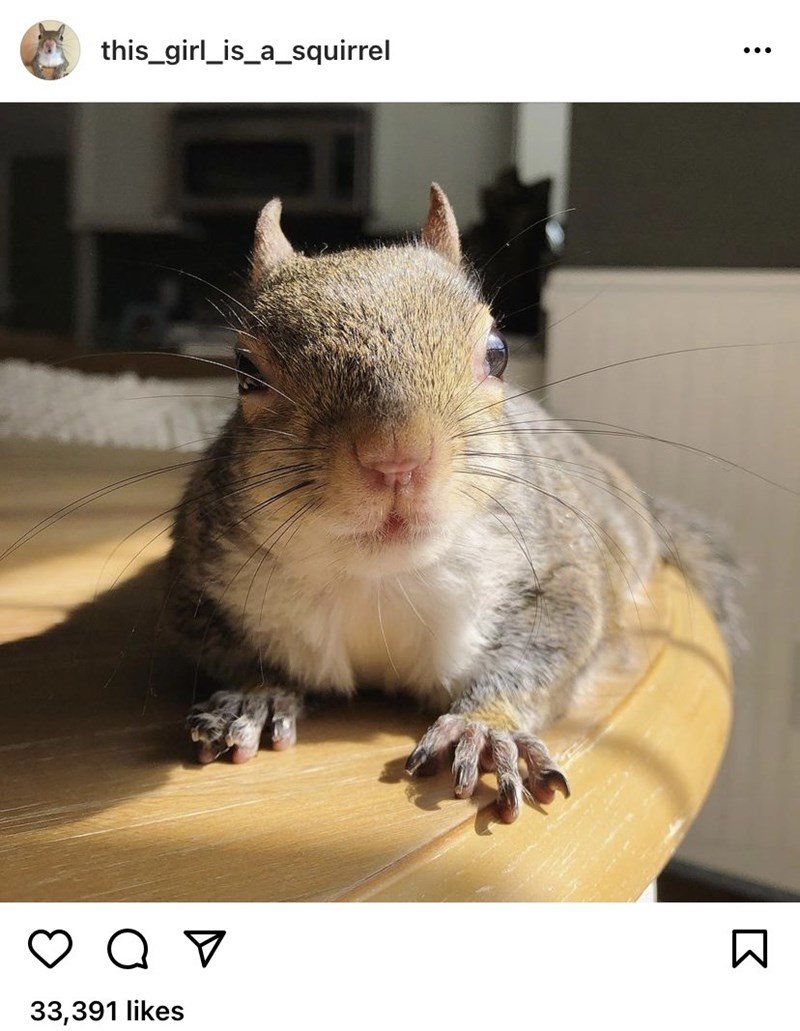 Organism - this_girl_is_a_squirrel ... 33,391 likes