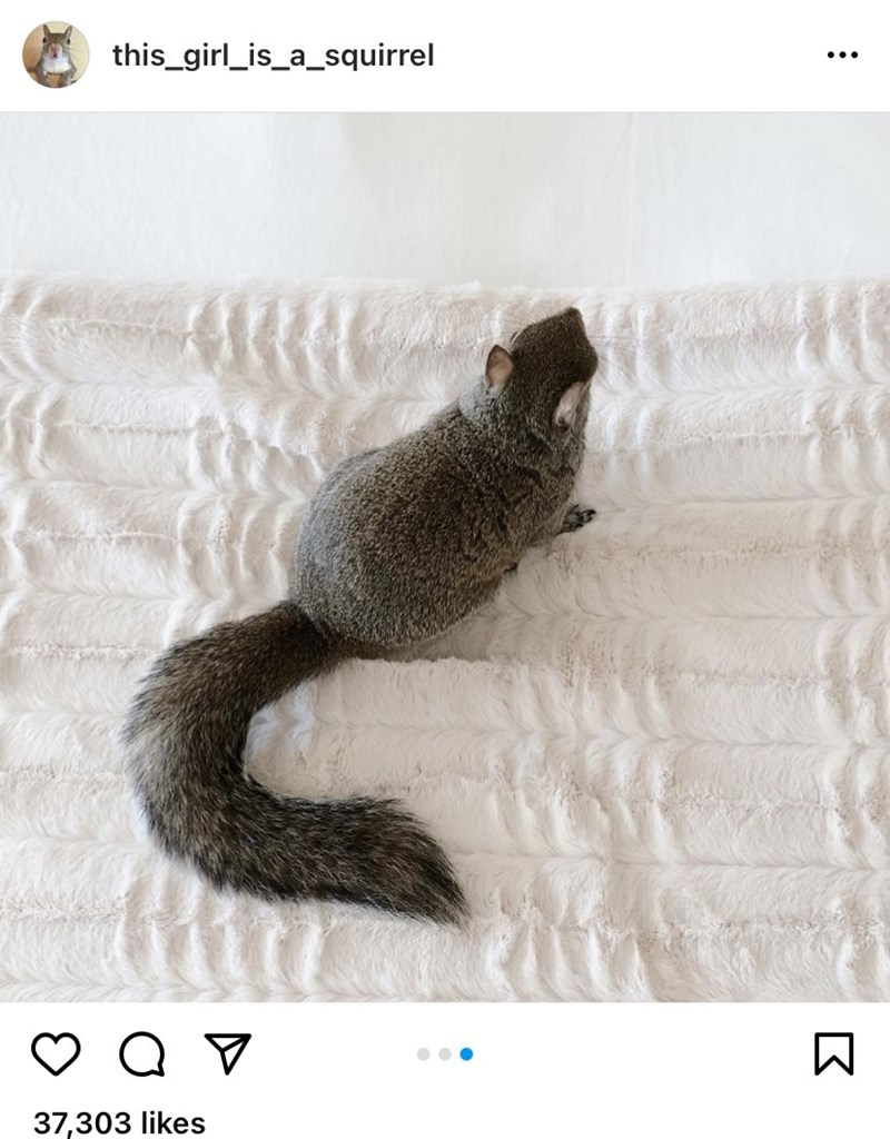 Organism - this_girl_is_a_squirrel ... 37,303 likes