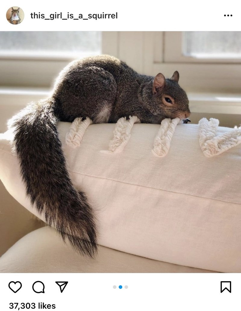 Photograph - this_girl_is_a_squirrel ... 37,303 likes