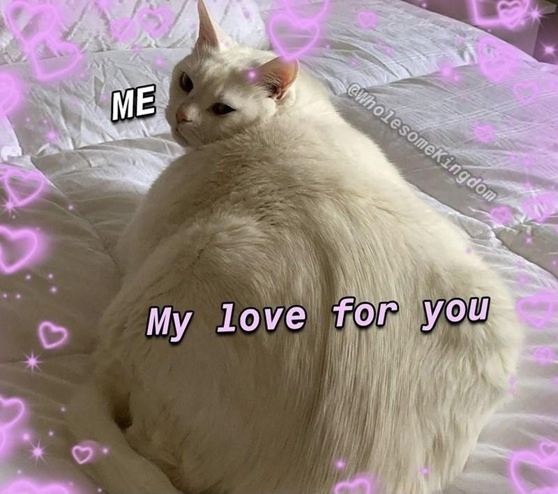 Cat - @WholesomeKingdom ME My love for you