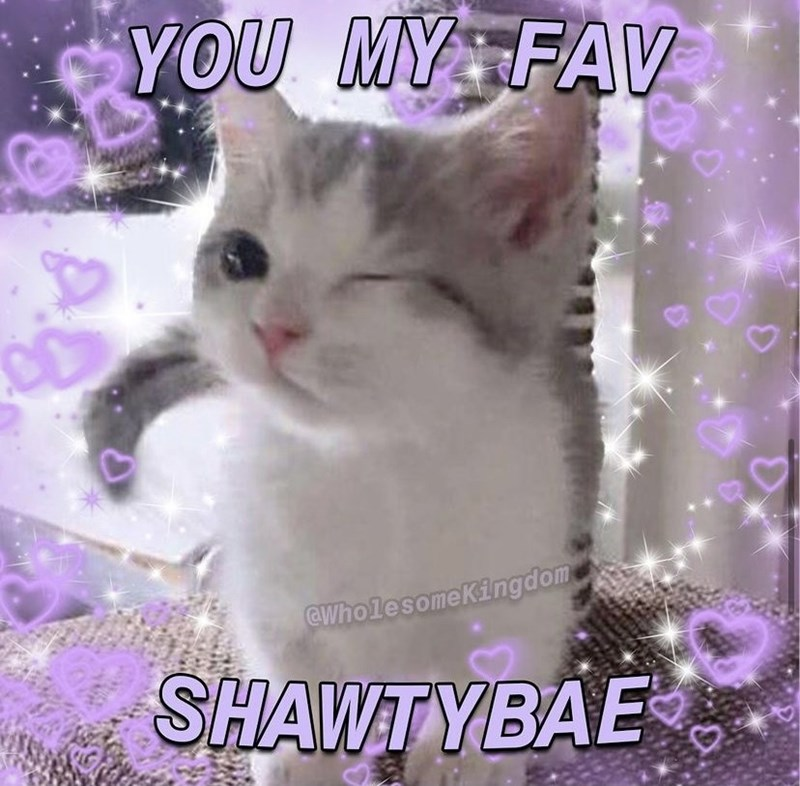 Cat - YOU MY FAV CWholesomeKingdom SHAWTYBAE