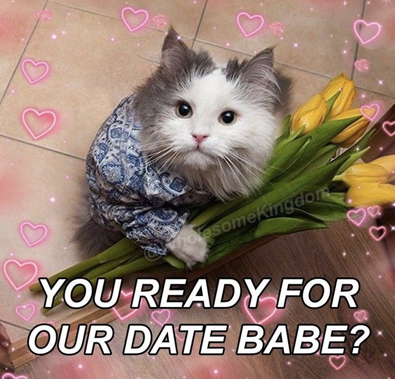 Cat - hotesomeKingdom YOU READY FOR OUR DATE BABE?