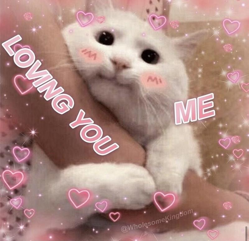 Cat - ME @WholesomeĶingtlom LOVING YOU