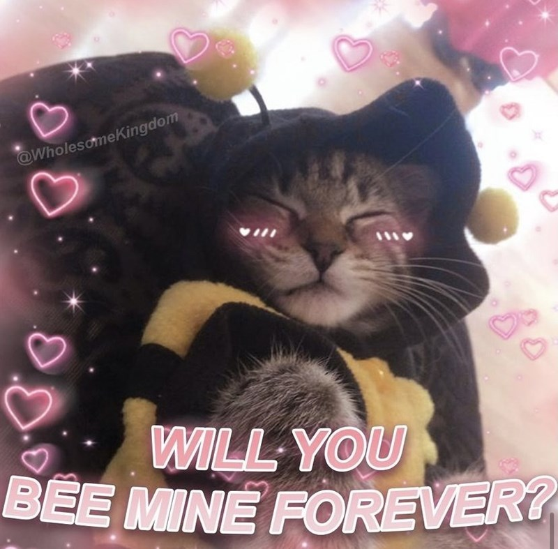 Cat - BÉE MINE FOREVER? @WholesomeKingdom WILL YOU 80