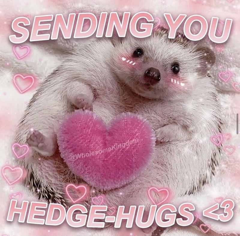Organism - SENDING YOU @WholesomeKingdom HEDGE-HUGS