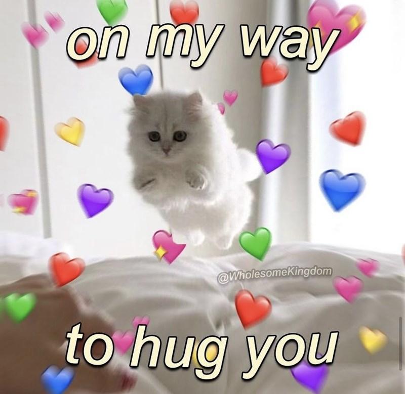 Cat - on my way W @WholesomeKingdom to hug you