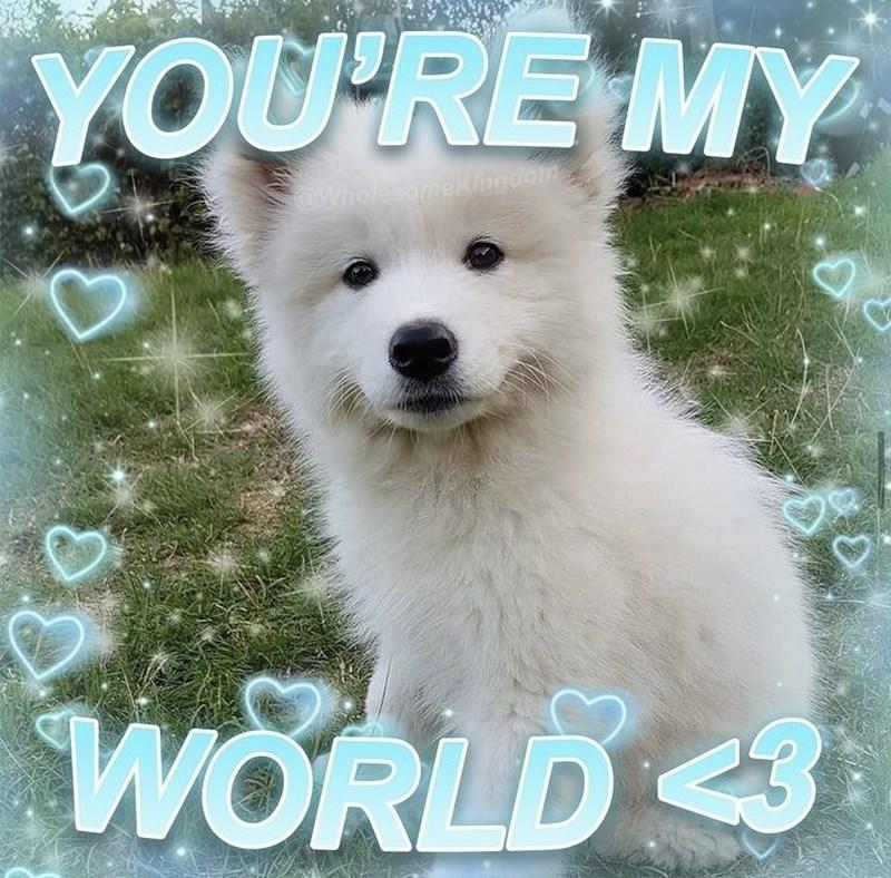 Dog - YOU'RE MY OWholesomeKingdom WORLD3