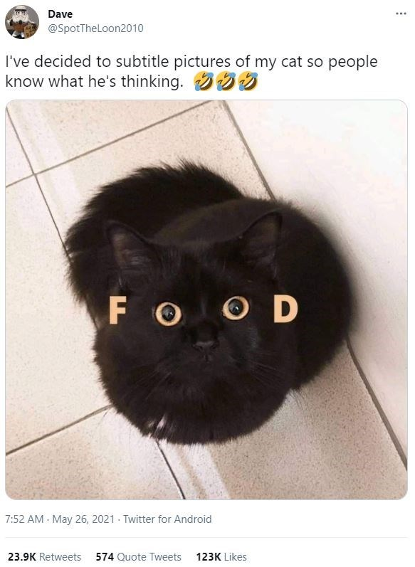Cat - Dave ... @SpotTheLloon2010 I've decided to subtitle pictures of my cat so people know what he's thinking. FO OD 7:52 AM - May 26, 2021 - Twitter for Android 23.9K Retweets 574 Quote Tweets 123K Likes