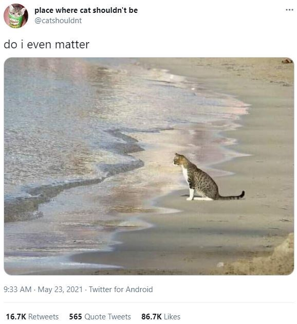 Water - place where cat shouldn't be ... @catshouldnt do i even matter 9:33 AM - May 23, 2021 - Twitter for Android 16.7K Retweets 565 Quote Tweets 86.7K Likes
