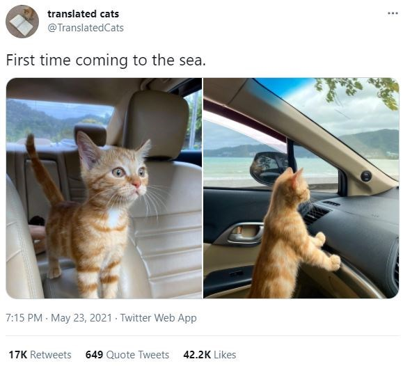 Cat - translated cats ... @TranslatedCats First time coming to the sea. 7:15 PM - May 23, 2021 - Twitter Web App 17K Retweets 649 Quote Tweets 42.2K Likes