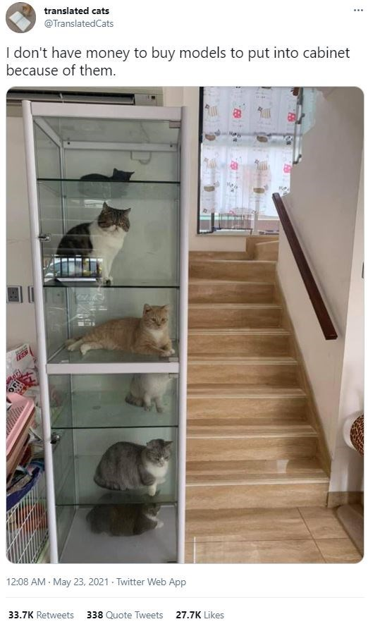 Cat - translated cats @TranslatedCats I don't have money to buy models to put into cabinet because of them. 12:08 AM - May 23, 2021 - Twitter Web App 33.7K Retweets 338 Quote Tweets 27.7K Likes