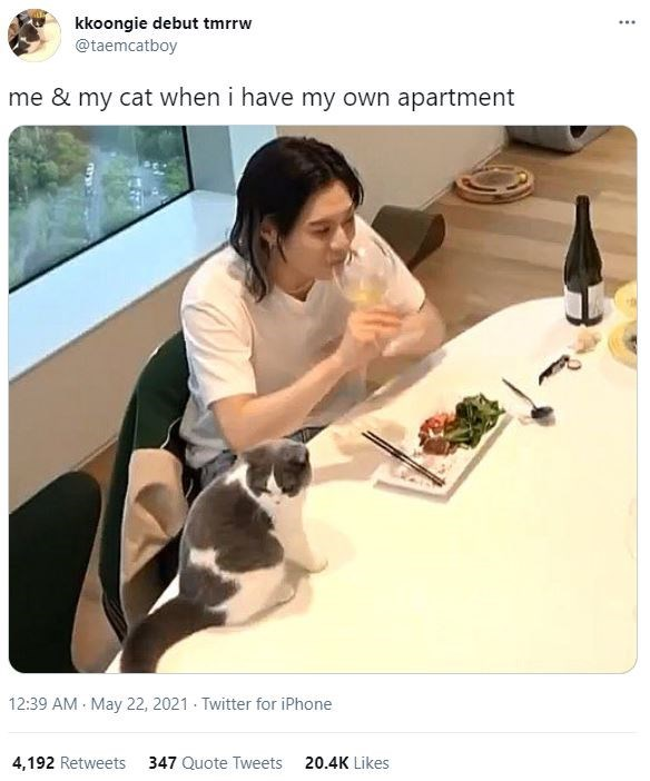 Tableware - kkoongie debut tmrrw @taemcatboy ... me & my cat when i have my own apartment 12:39 AM May 22, 2021 - Twitter for iPhone 4,192 Retweets 347 Quote Tweets 20.4K Likes