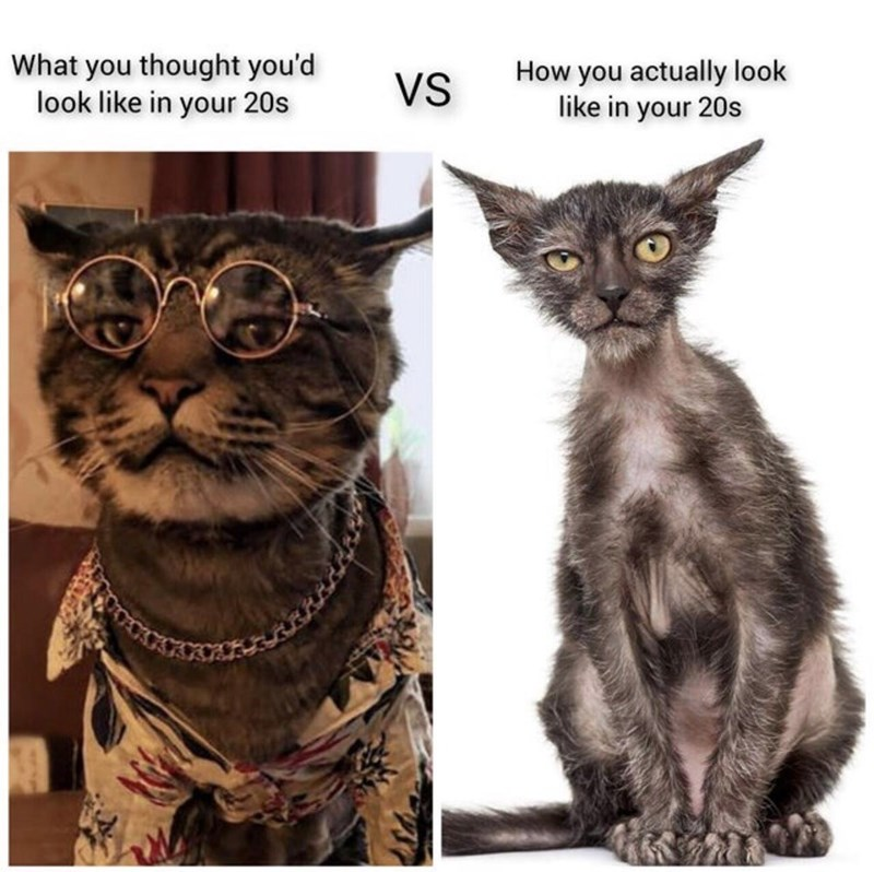 Cat - What you thought you'd look like in your 20s How you actually look like in your 20s VS