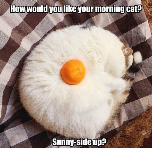Food - How would you like your morning cat? Sunny-side up?