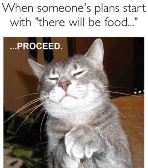 """Cat - When someone's plans start with """"there will be food.."""" %3D .PROCEED. MasiPopal"""