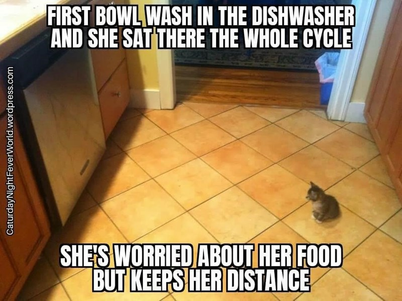 Cat - FIRST BOWL WASH IN THE DISHWASHER AND SHE SAT THERE THE WHOLE CYCLE SHE S WORRIED ABOUT HER FOOD BUT KEEPS HER DISTANCE CaturdayNightFeverWorld.wordpress.com