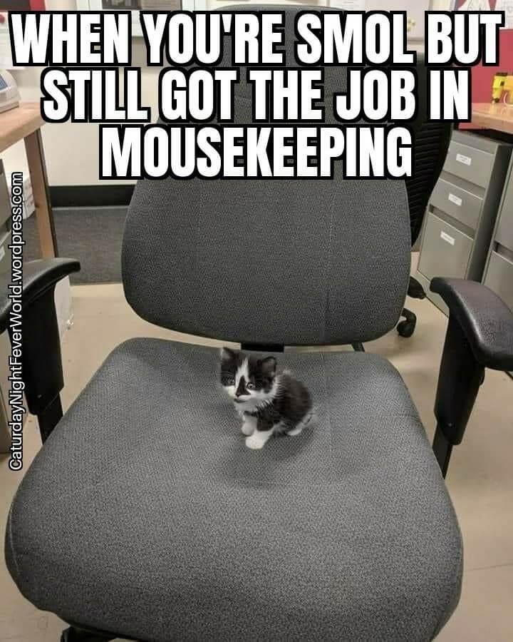 Furniture - WHEN YOU'RE SMOL BUT STILL GOT THE JOB IN MOUSEKEEPING CaturdayNight FeverWorld.wordpress.com
