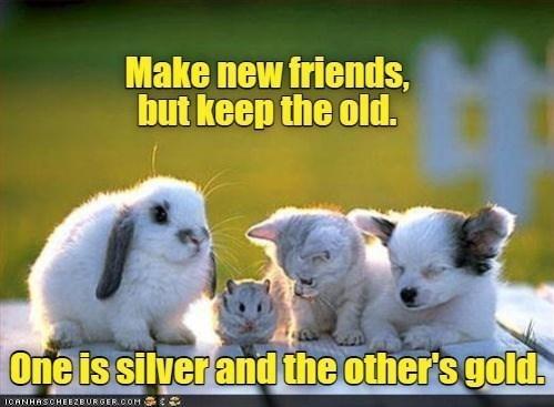 animal memes - 9613971456