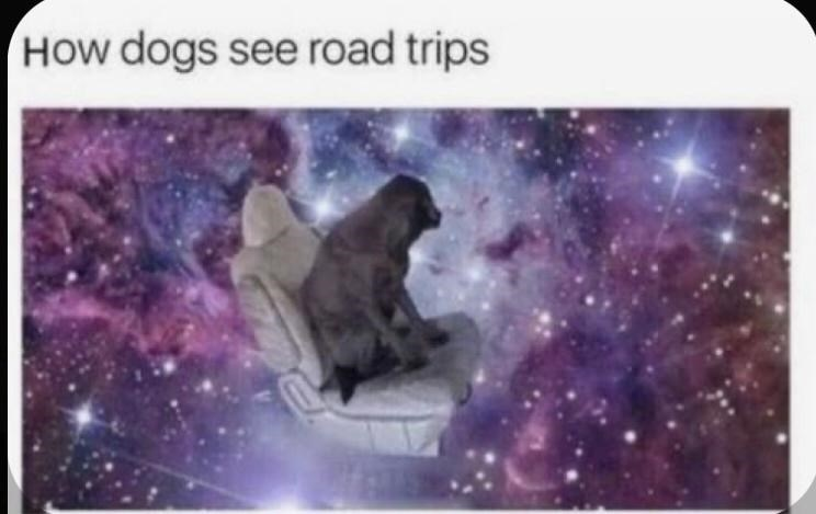 World - HOw dogs see road trips