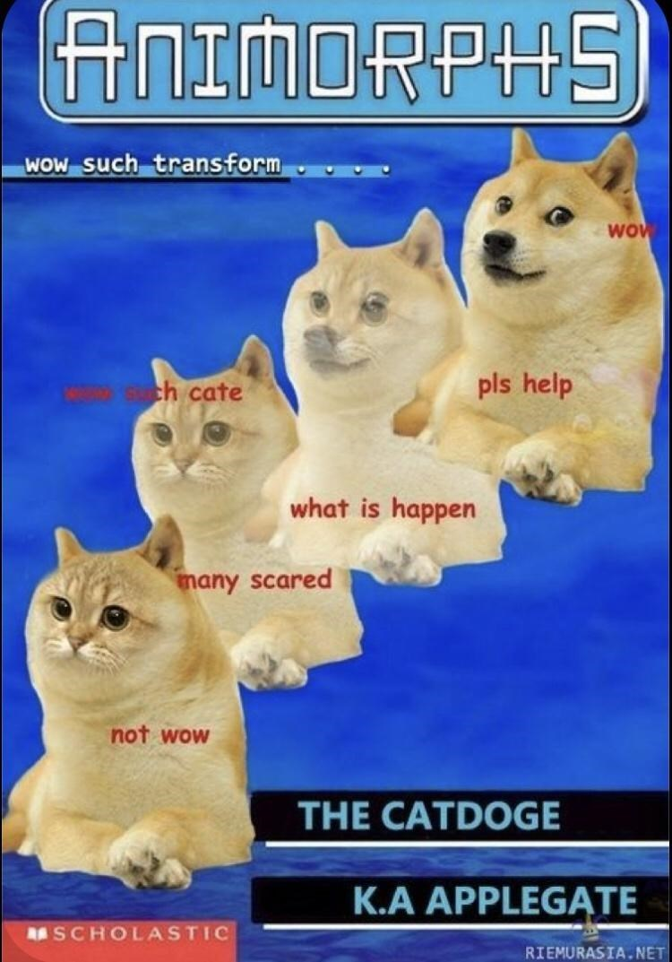 Cat - ANIMORPHS) WOW such transform Wo ch cate pls help what is happen nany scared not wow THE CATDOGE K.A APPLEGĄTE RSCHOLASTIC RIEMURASIA.NET